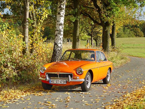"""""""Percy"""" - farblich abgestimmt auf einen """"Goldenen Oktober""""."""