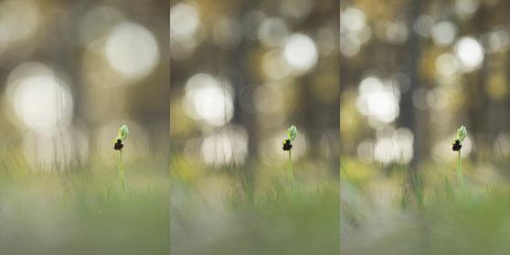 Walimex 135mm f/2,0 Blendenvergleich