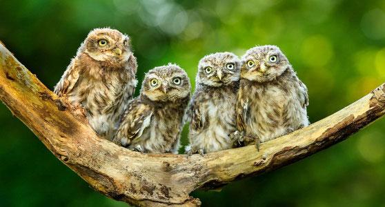 Tiere und Artenvielfalt in den Baumbergen