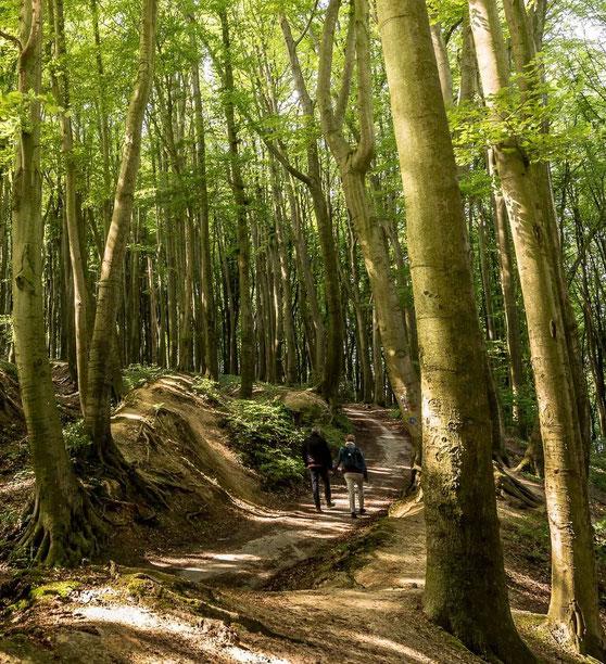 Wandern im Münsterland durch die Baumberge im Wald