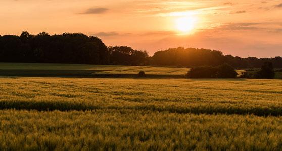 Erkunden Sie die Baumberge im Münsterland während eines Urlaubs in Nordrhein-Westfalen