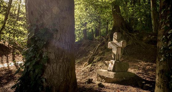 Erholung im Wald beim Wandern in den Baumbergen