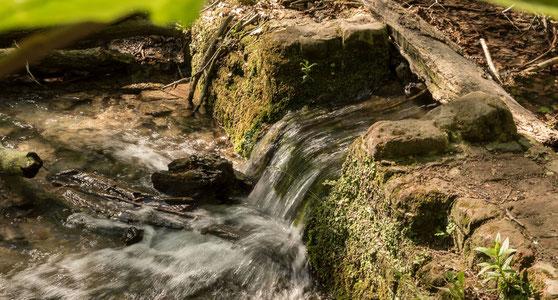 Quellwasser der BErkel und Vechte in den Baumbergen