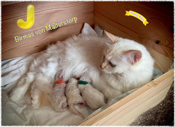Cherry und ihre Babys am 08.10.2021