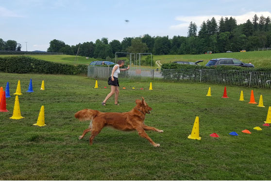 Hundeschule DreamTeam Circle Game Sabine Rohr