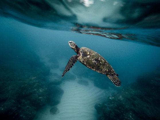 Küstenregionen ohne Plastikmüll im Meer sind heute leider die Ausnahme, nicht die Regel.