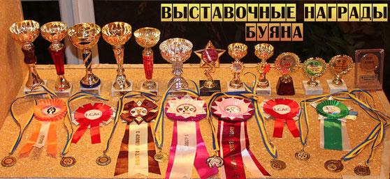 выставочные награды самоеда