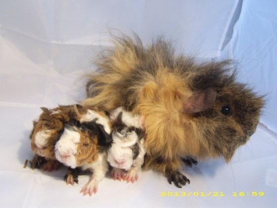 Zazette und ihre Kinder
