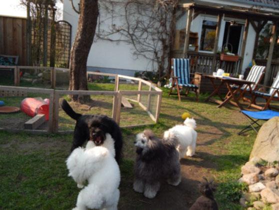 Hardy, Beverly, Emmely & Alia