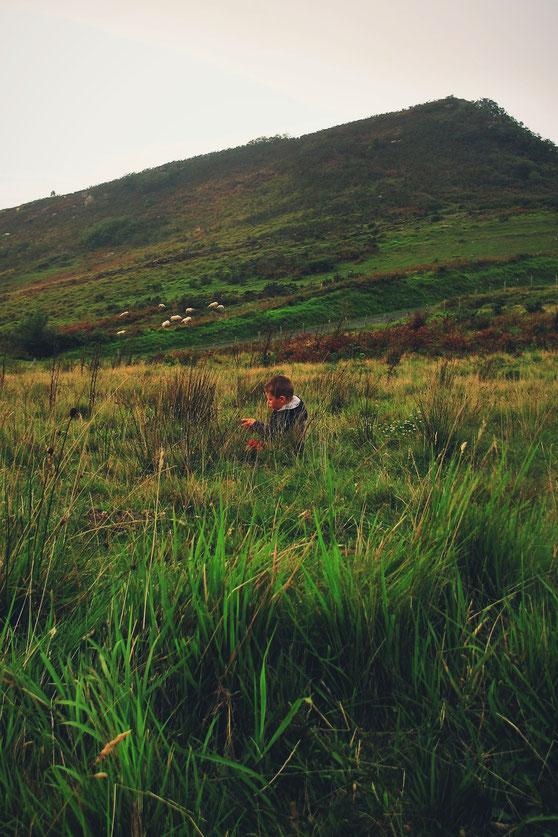 bigousteppes jaizkibel moutons