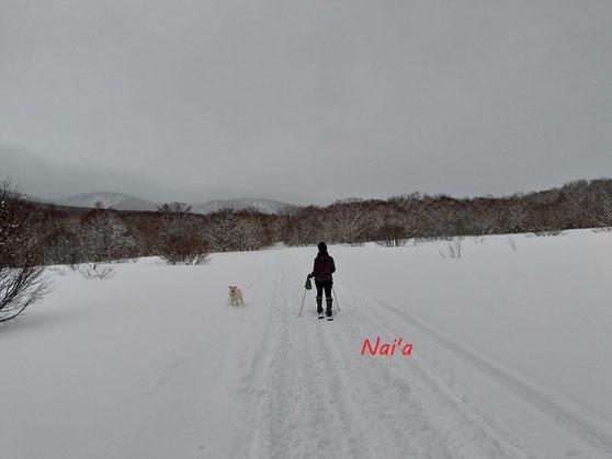 犬と雪遊び 愛犬とドライブ