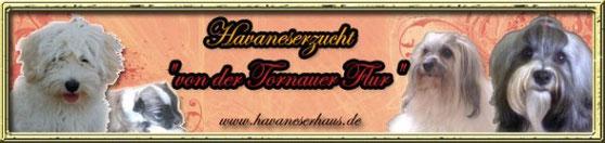 Banner Havaneser von der Tornauer Flur