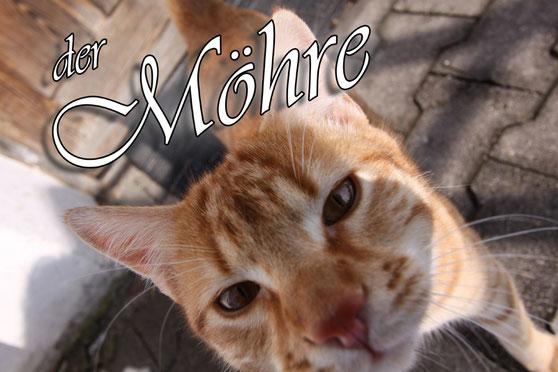 artblow - GEORG HIEBER: Der Möhre - Katze - Katzen - Kater