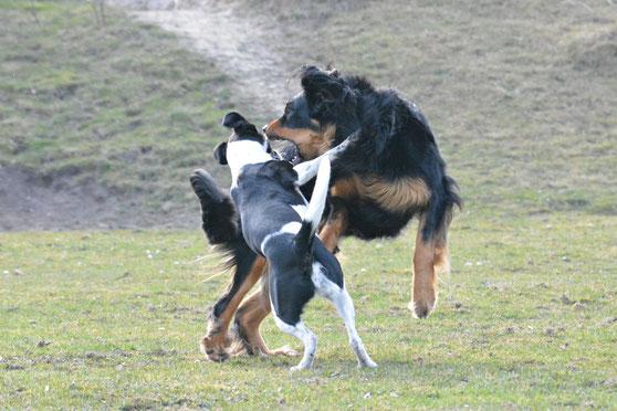 Spielverhalten, Hund, Janina Hoch 2
