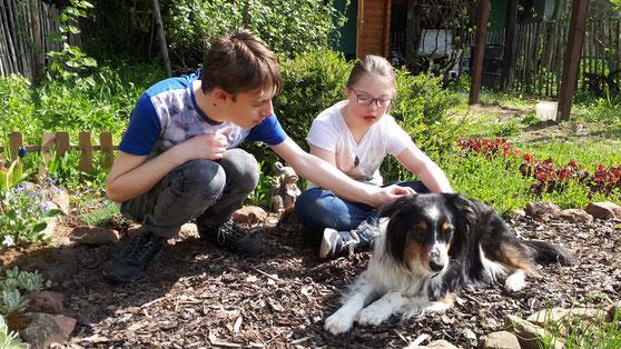 Mila ist eine sechsjährige Australian Shepherd-Hündin. Sie begleitet mich seit Welpenalter ein bis zweimal pro Woche in die Schule und hat ihre Begleithundeprüfung erfolgreich absolviert.