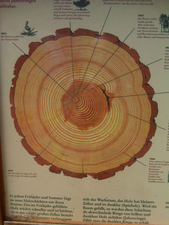 Geheimnisse im Datenschutz und im Holzstamm