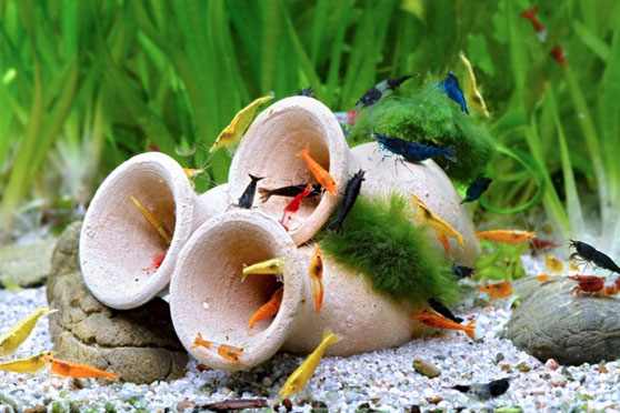 Reines Wasser Pflanzen Osmosewaser Natur Garnelen Neocaridina Aquaristik Nano