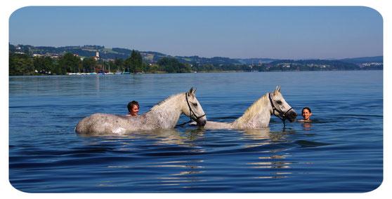 Schwimmen mit den Pferden im Sempachersee