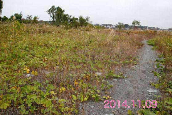 2年前。すでに土砂の堆積が目立ち、クズも侵入していたが、今年ほどではなかった。
