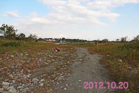 4年前。土砂の堆積が始まっていたが、まだ多くのカワラノギクが咲いていた。