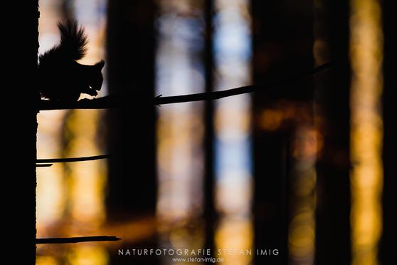 Eichhörnchen Stefan Imig