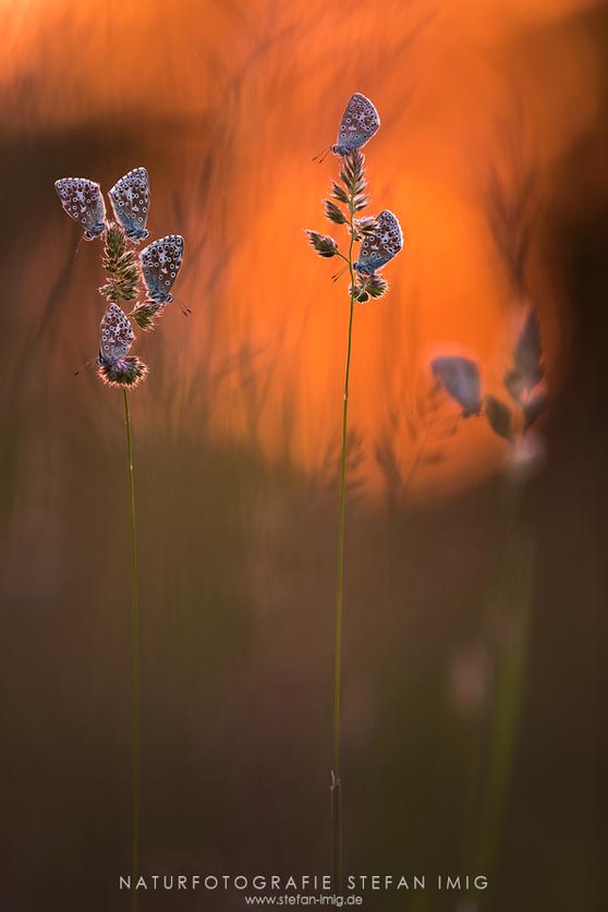 Schmetterlinge Stefan Imig