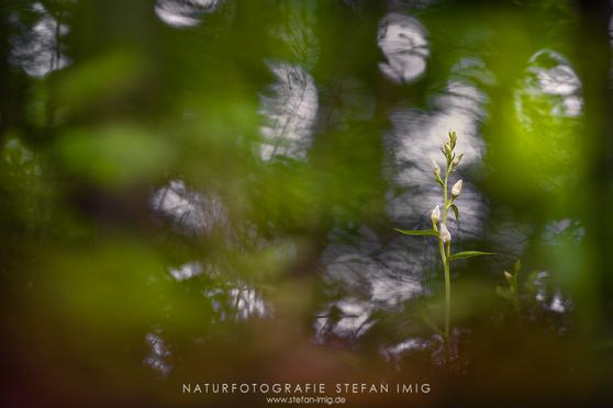 Orchideen Stefan Imig