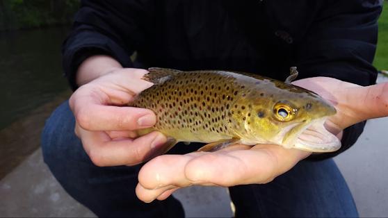 自己釣的鱒魚,如果符合體型和休漁時間的要求,可以就地宰魚,帶回家吃!(作者攝圖)