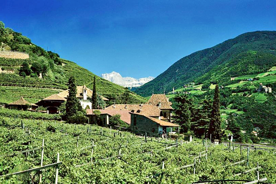 Ansitz Waldgries - Tenuta - Wein - Südtiroler Wein - Vino - Vino Altoatesino - Bozen - Bolzano - Gourmet Südtirol