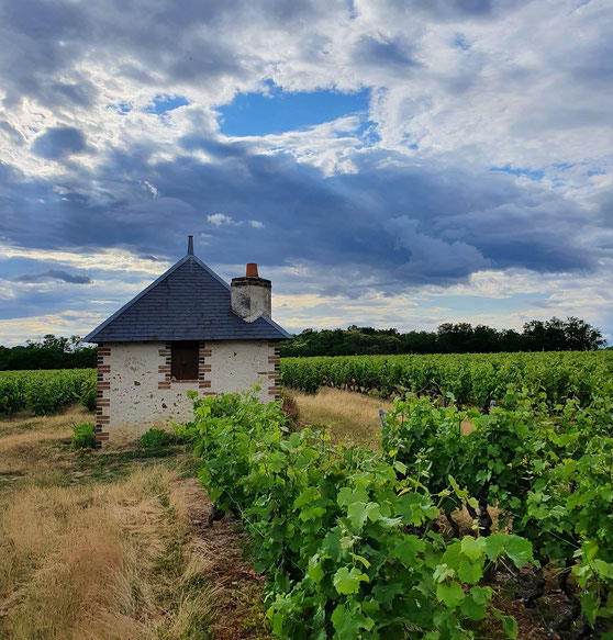 vineyard-lodge-AOC-Vouvray-wine-tour-Loire-Valley-wine-tasting-local-guide