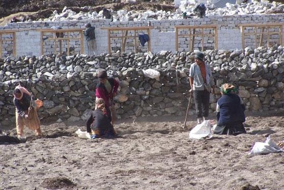 aardappels poten in de Himalaya