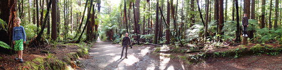 Der rote Wald