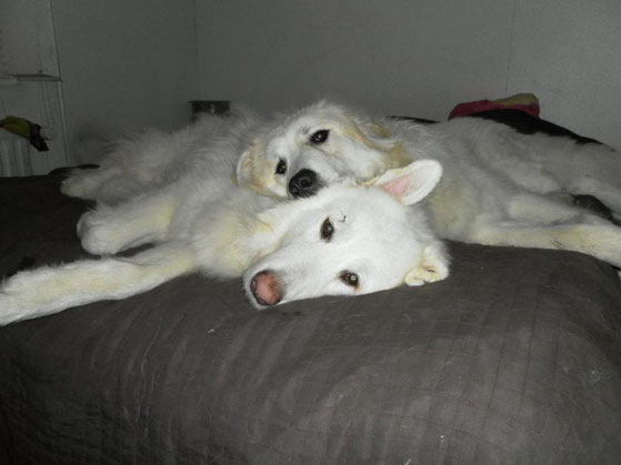 Tao & Koda, Best friends for life!