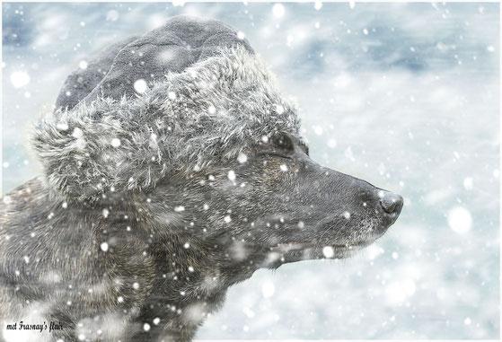 Bobbie trotseert hevige sneeuwstormen