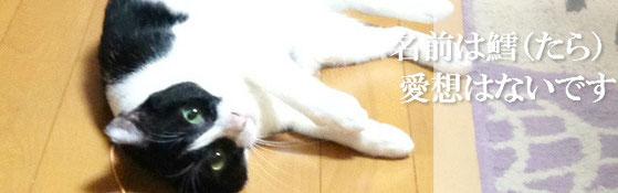猫のセラピー