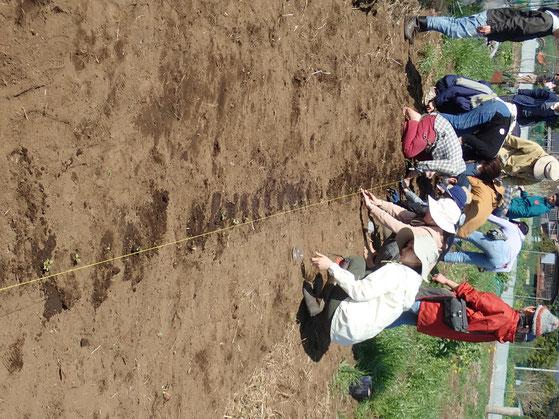 無農薬栽培の野菜作り教室でコマツナ・カモミールの種まきと固定種レタスの定植@さとやま農学校