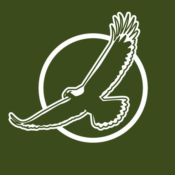 design illustration melanie suter digital adler flug fliegend fliegt piktogramm negativ olive grün sonne kontur symbol