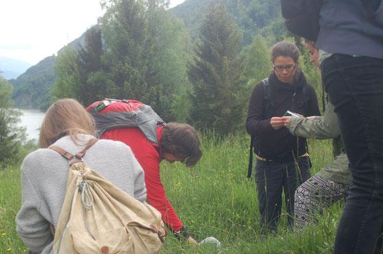 Kräuterwanderung in Gruppen