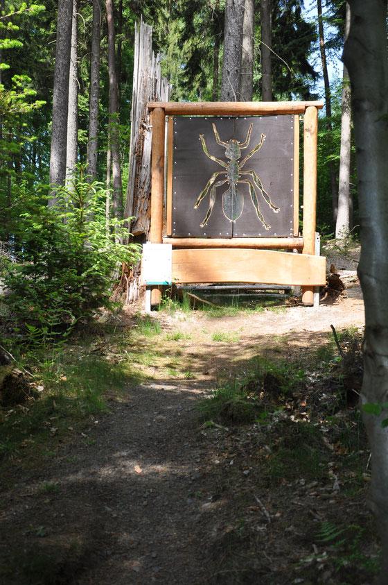 Unser Ameisen-Waldfenster