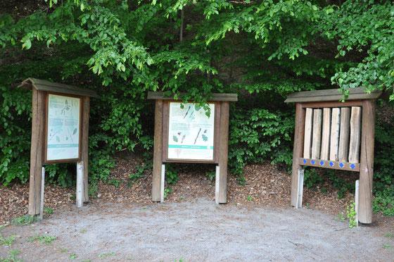 Station 1: Laubbäume