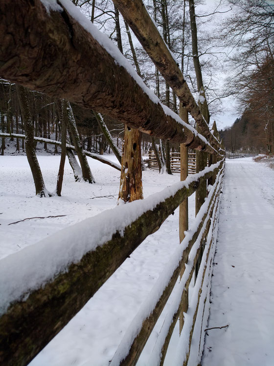 Winter im Wildpark