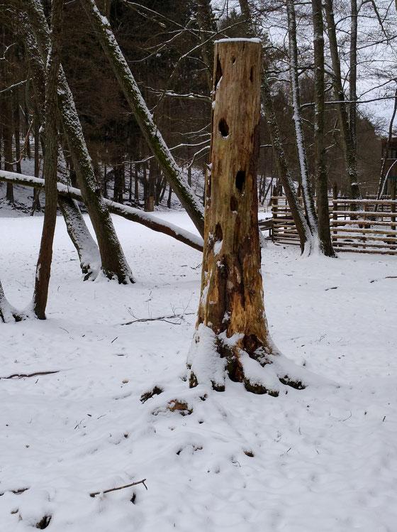 Totholz im Schnee