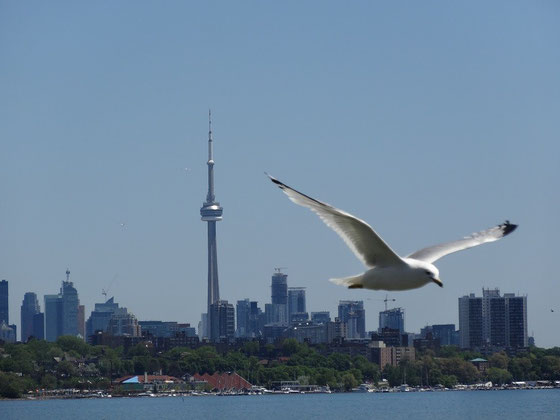 Lake Ontario und Torontos CN Tower