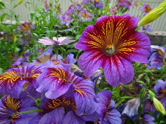 Allan Gardens Conservatory: Farbenfrohe Flora in Toronto.