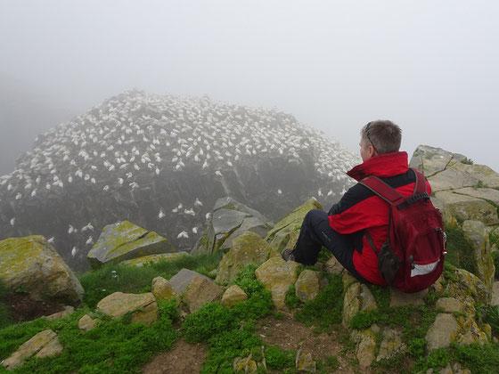 Cape St. Mary's Ecological Reserve: Selbst bei dichtem Nebel kann man die Tölpel im Vogelschutzgebiet gut sehen.