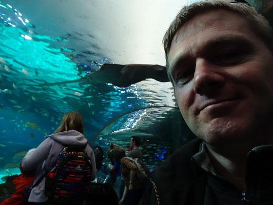 Ripley's Aquarium of Canada: Eine Attraktion im Herzen Torontos.