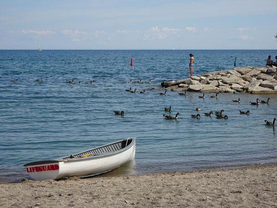 Sommer in Toronto: Strandszene vom Kew Beach.