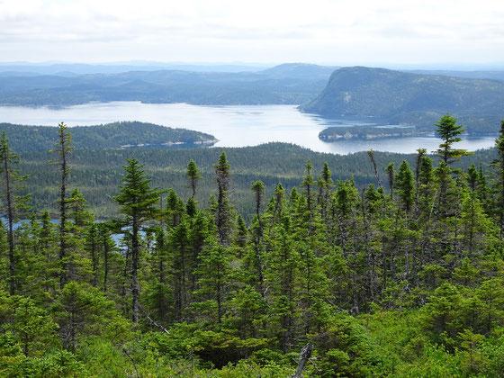 Unterwegs im Terra Nova Nationalpark: Blick auf die Landschaft am Newman Sound.