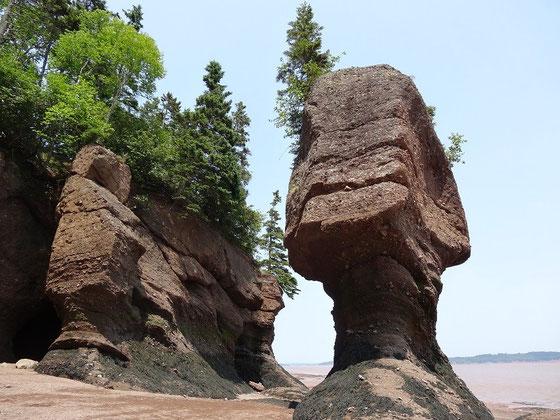An den Flowerpot Rocks kann man die Gezeiten gut beobachten. Der Tidenhub an den Hopewell Rocks ist 16 Meter!