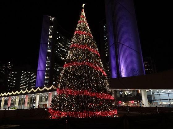 Cavalcade of Lights: Der beleuchtete Weihnachtsbaum vor dem Rathaus von Toronto.